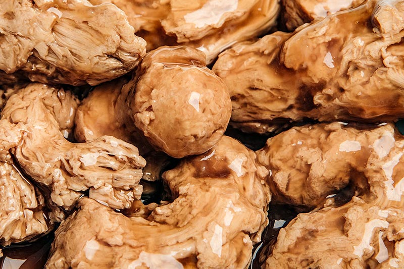 Wheat as the ideal source of flavour for pet food | Crespel & Deiters