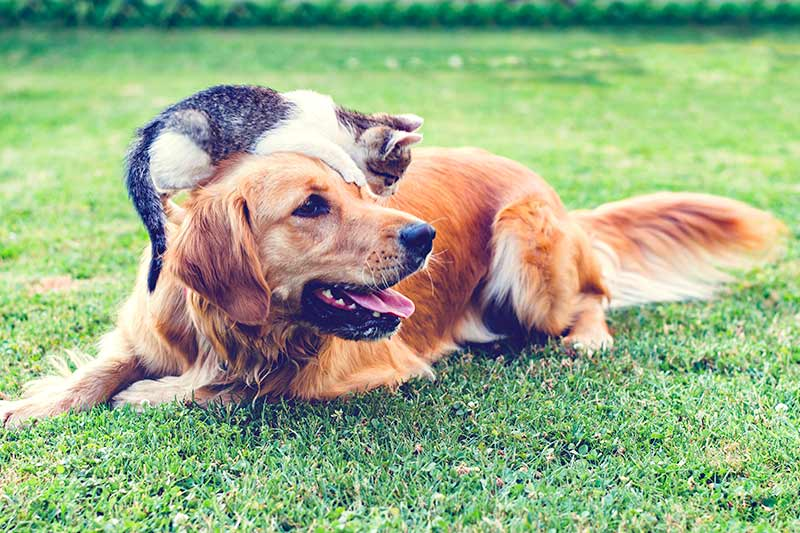 More naturalness in pet food, thanks to wheat | Crespel & Deiters