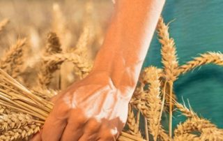 As a producer of wheat starches and wheat proteins, we extract wheat-based raw materials from wheat, which are refined into highly functional products | Crespel & Deiters