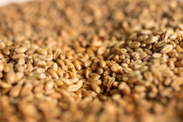 High-quality, GMO-free EU wheat for manufacturing food ingredients at Loryma