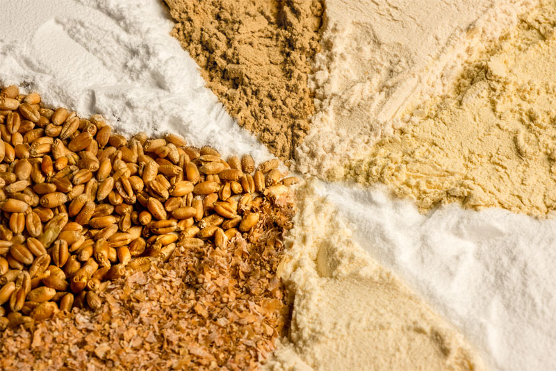 Plant-based raw materials made from wheat, which Trigea refines for animal feed to create highly-functional products, are of a high quality and GMO-free | Crespel & Deiters